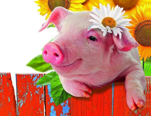 Прикольные картинки со свиньей 2019, мексиканские картинки открытка