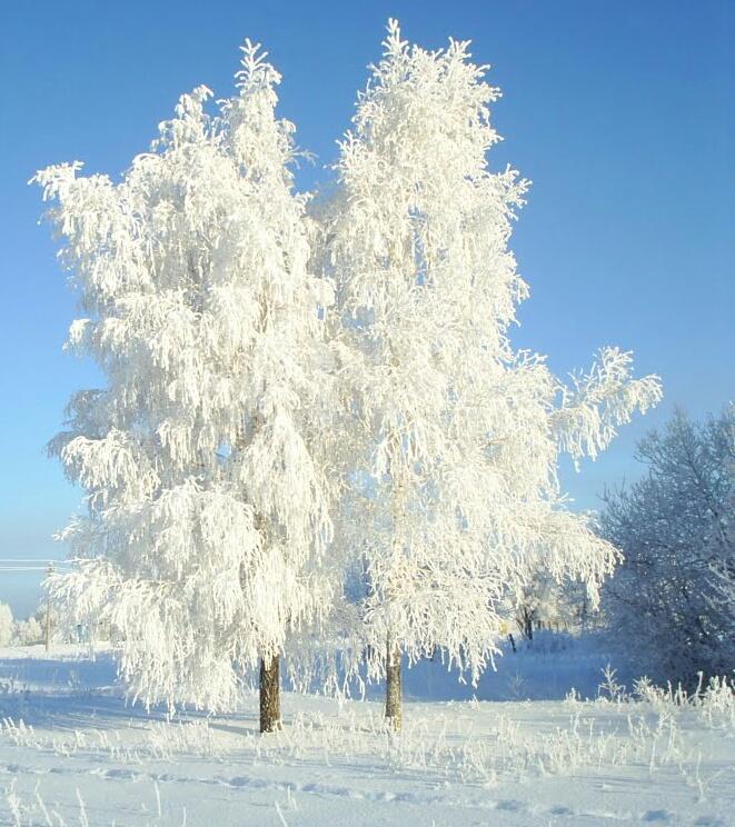 название доброе зима картинки березы органы