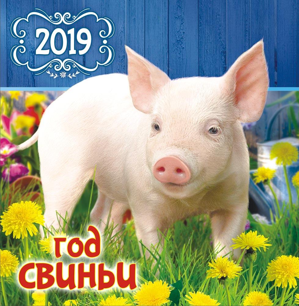 Смешные картинки идет год свиньи, машины