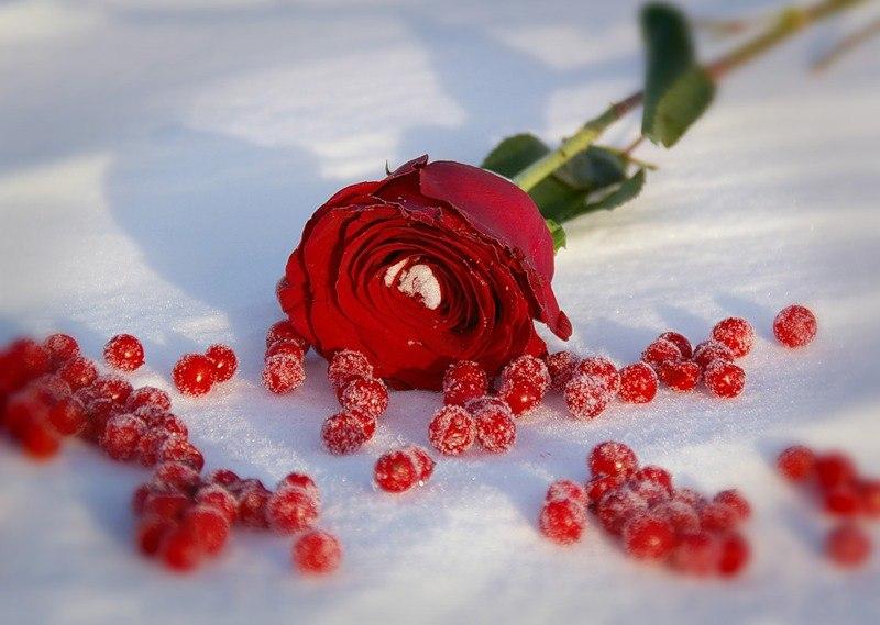 Открытки с цветы зимние красивые