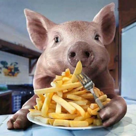 Прикольные картинки поросенок ест