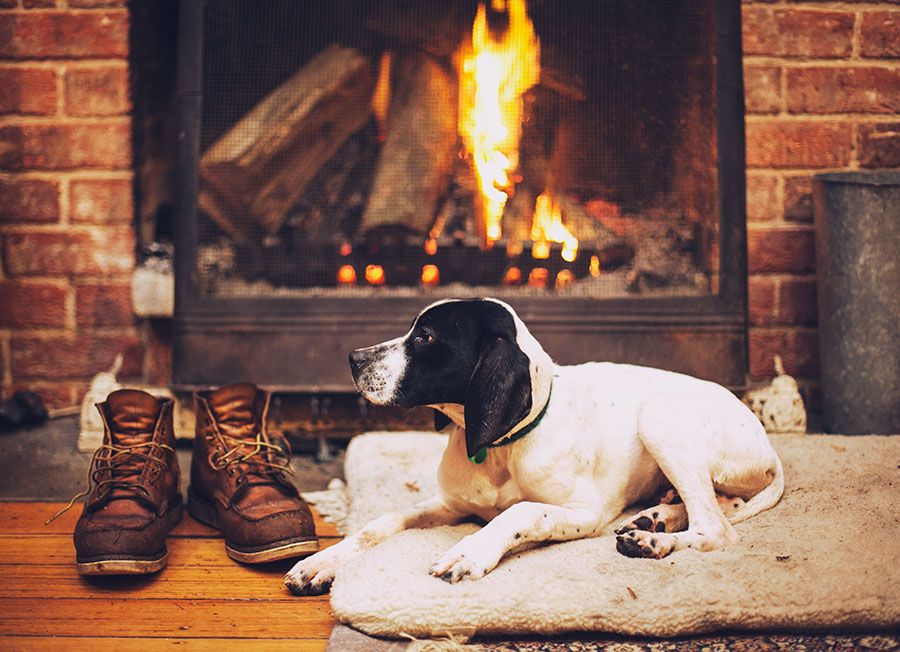 Картинка собака у камина