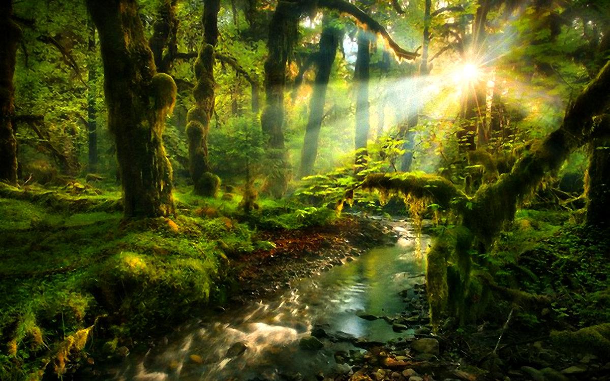 расположен красивые картинки о природе лес можете поделиться