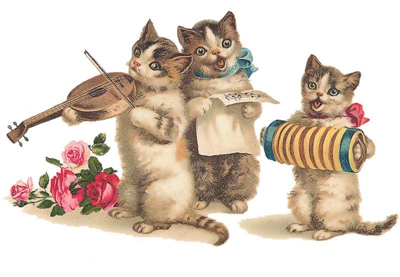 Николай с днем рождения открытка кот