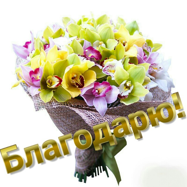 https://www.stihi.ru/pics/2019/02/20/2661.jpg