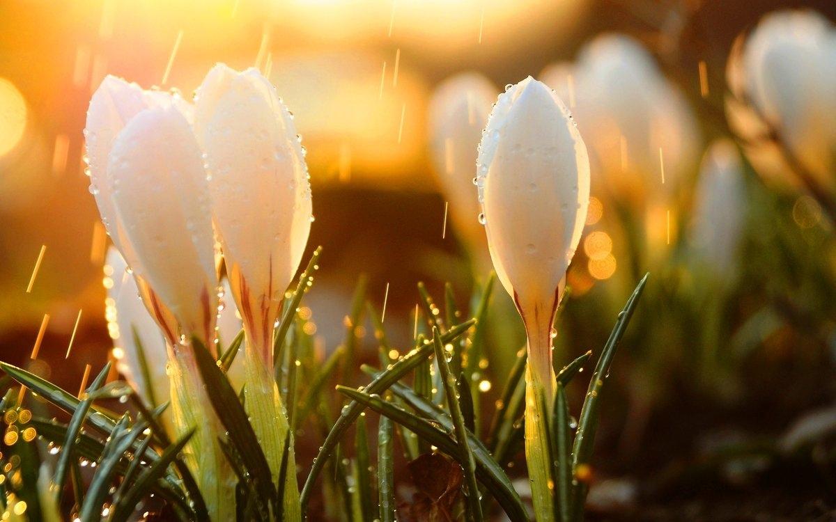 должного лучшие фотографы весна лекарственной