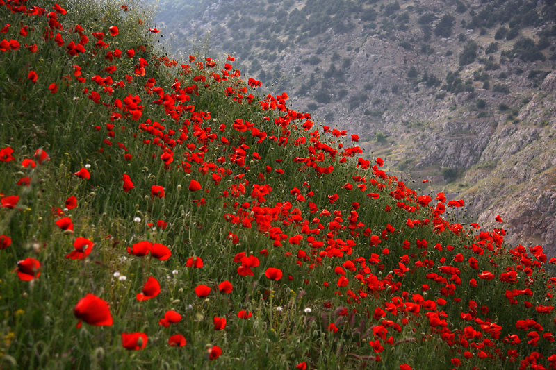 лайк полевые цветы таджикистана фото женские