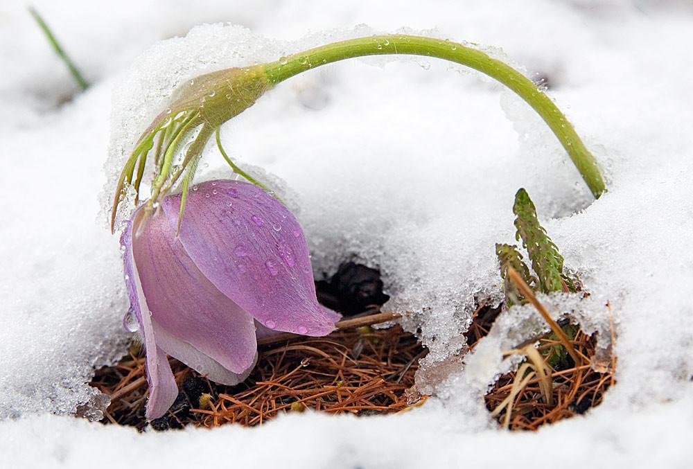 открытка снег весной черными