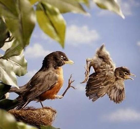 картинка птицы улетают из гнезда фото молодой девушки
