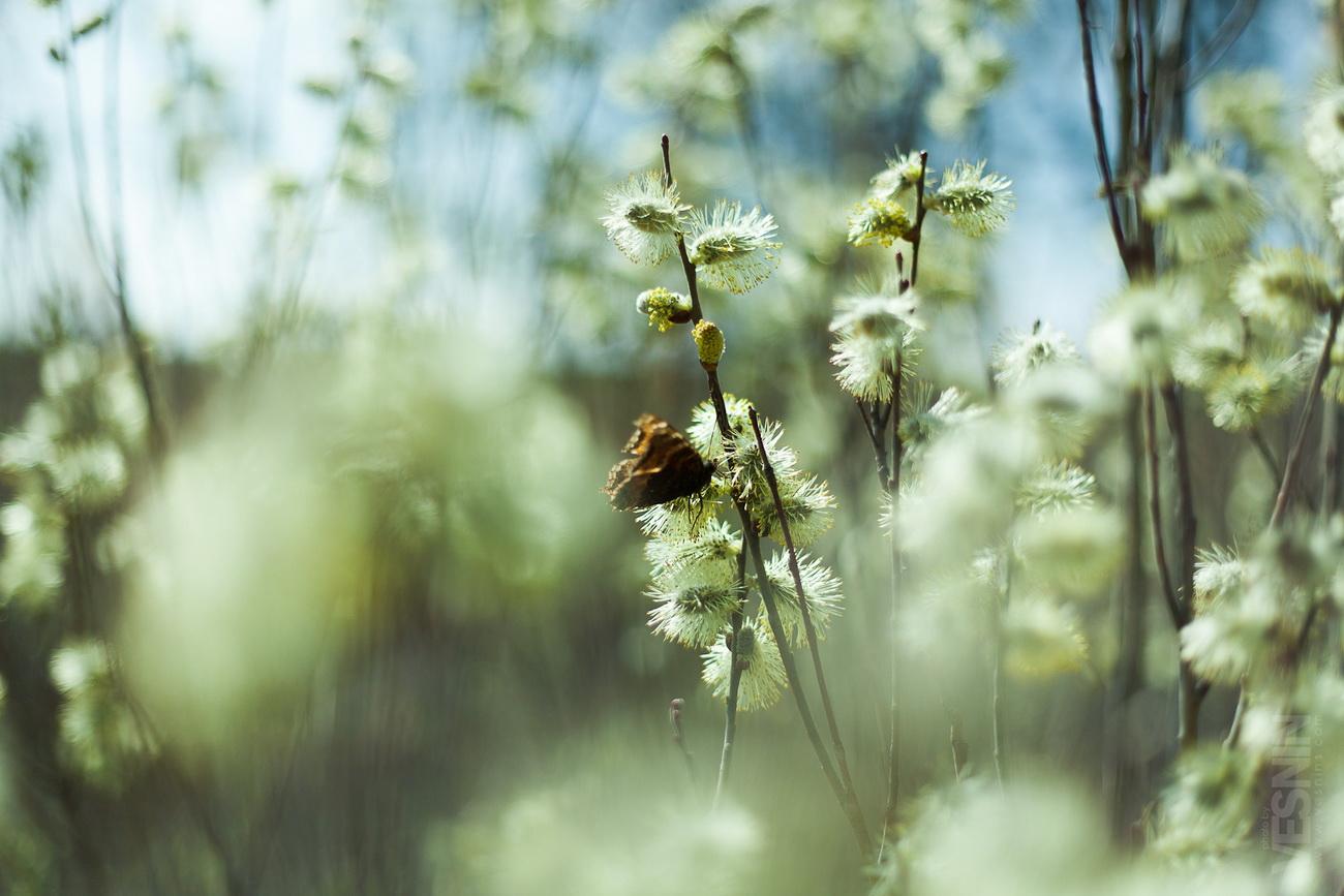 Картинка апрель природа, открытку другу отдыха