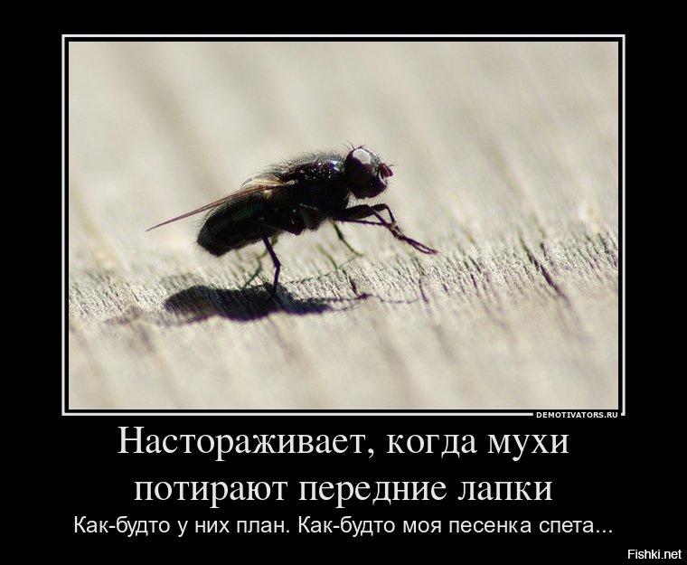 Гиф анимация, смешные картинки про мух с надписями