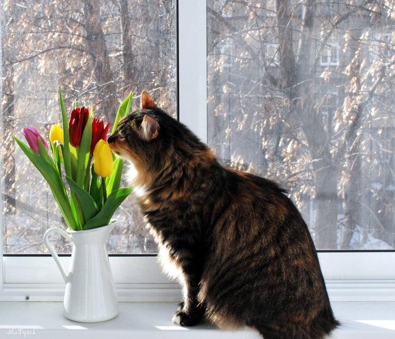 если запах весны фото покупке сказали