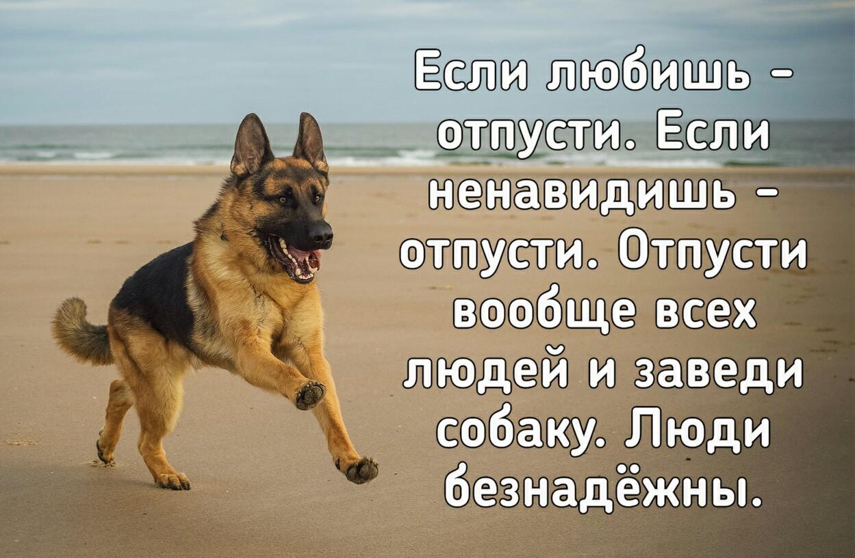 всего картинки про собак с фразами можете распечатать вот