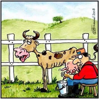Картинки смешные корову доят