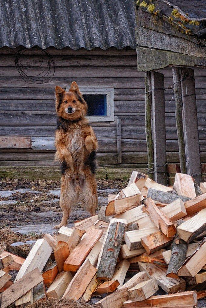 Прикол картинки с дровами, поверишь для приколов