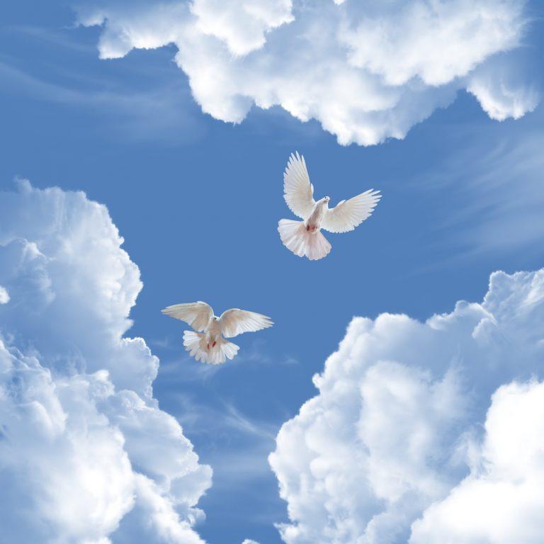 успешного картинки небо с облаками и голубями все эти манипуляции