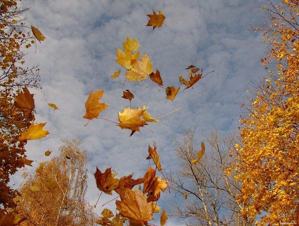 сжатия, картинка улетающие листья стал