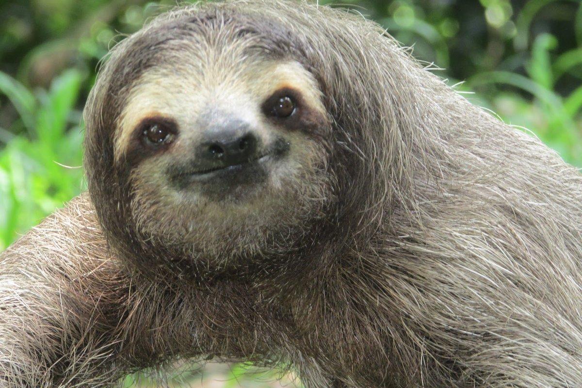 смешные ленивцы фото человека