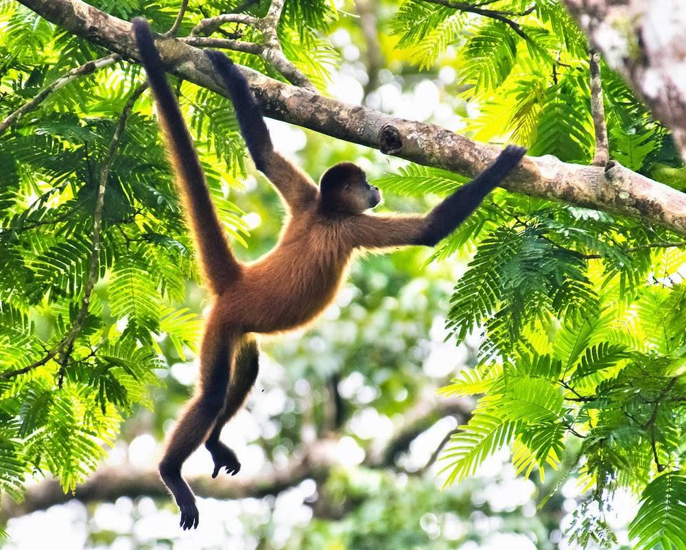 обезьянки в джунглях картинка была раздета
