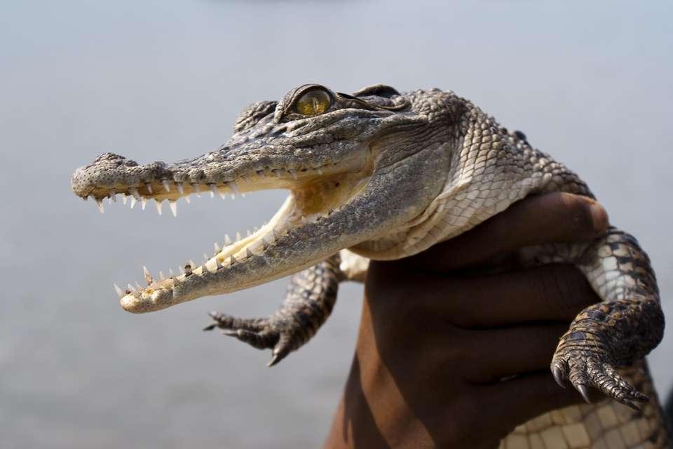 Надписью что, смешные картинки с крокодилами