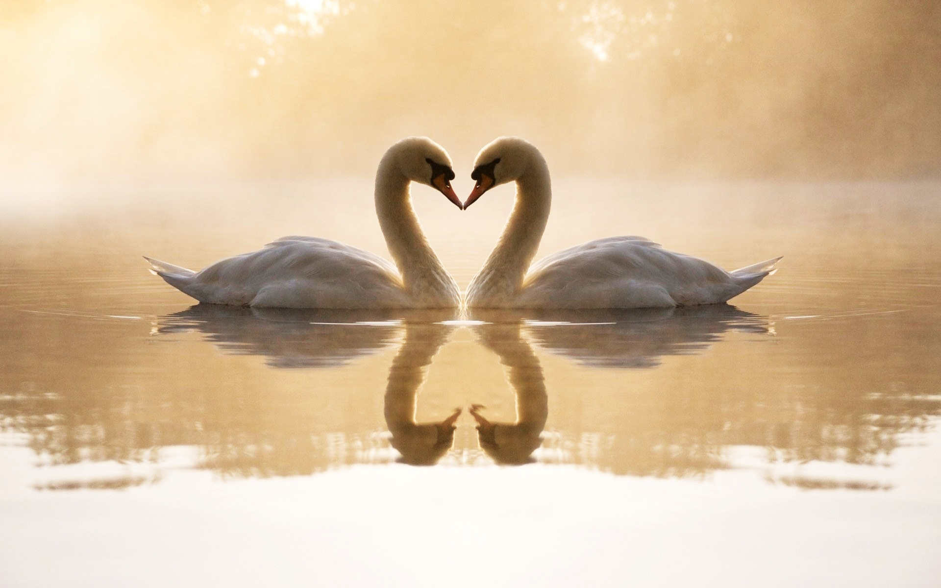 было найти картинки красивые о любви подборка