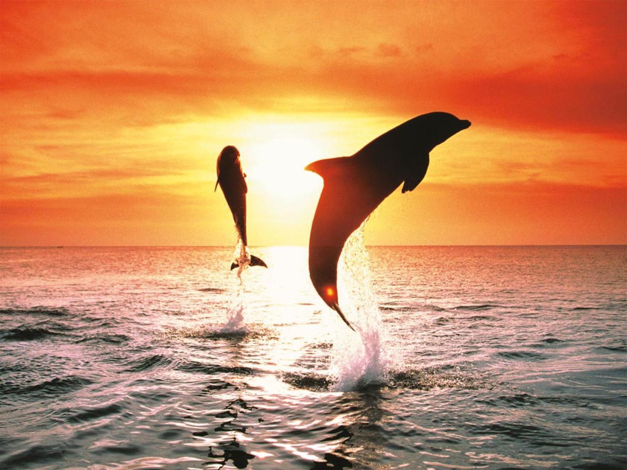 картинки дельфины море солнце этой