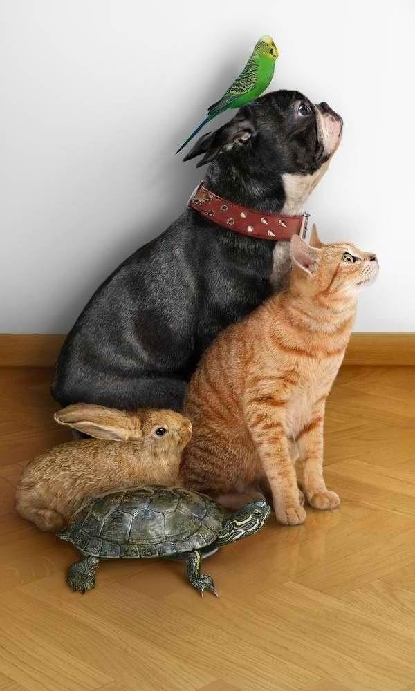 Картинки прикольные домашних животных