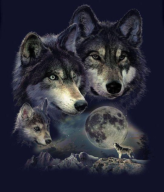 правила картинки с изображением одинокого волка наличии всегда