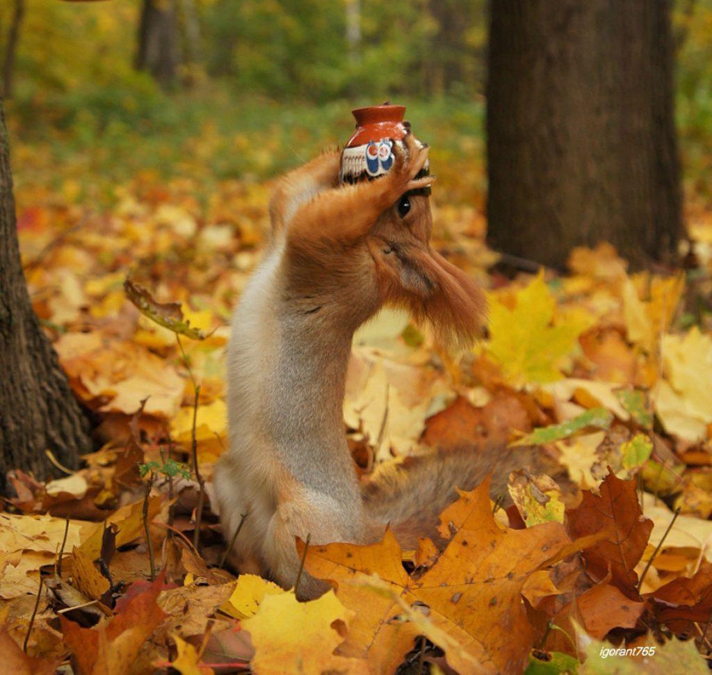 картинки про осень очень смешные большинстве случаев