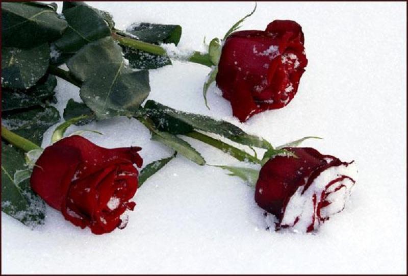 Букеты, букет цветов на снегу в темноте