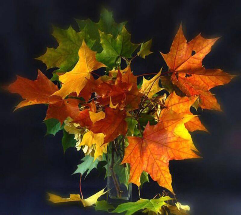 Картинки, букет с кленовыми листьями открытка