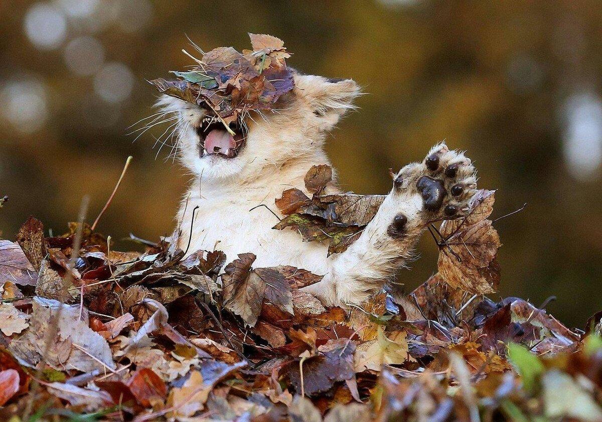 Букет, картинки осень с животными красивые и смешные