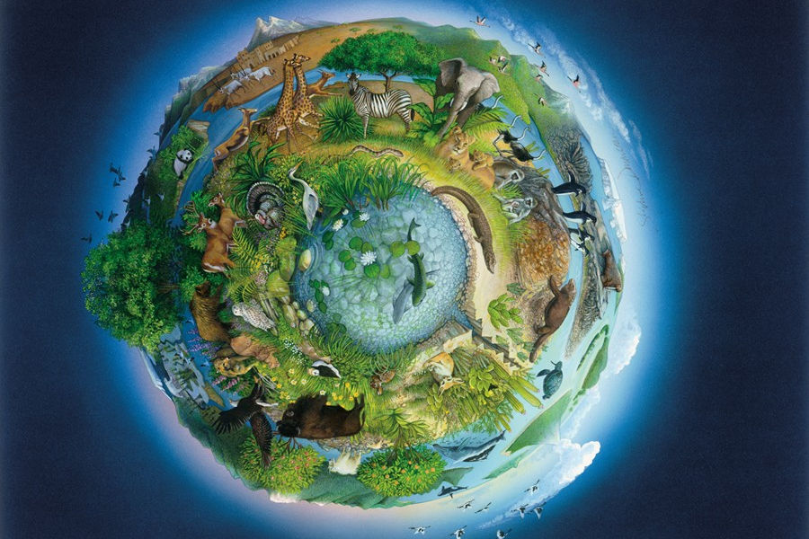 Экосфера экологическая оболочка земли картинки бабушка катрин