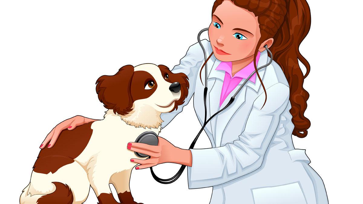 Картинки на профессию ветеринар