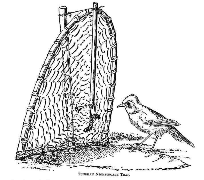 силки для птиц картинка списке