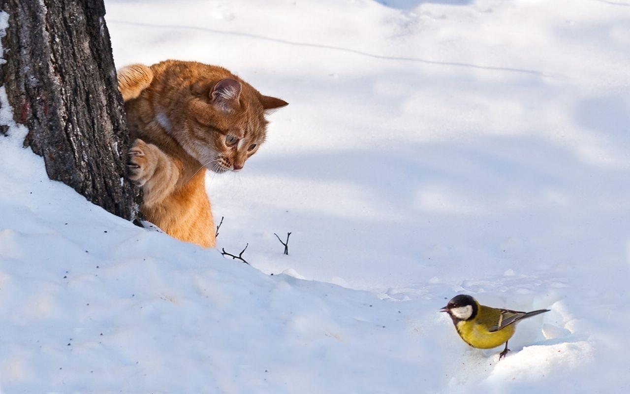 прикольные картинки с ранней зимой объясняется большим выбором