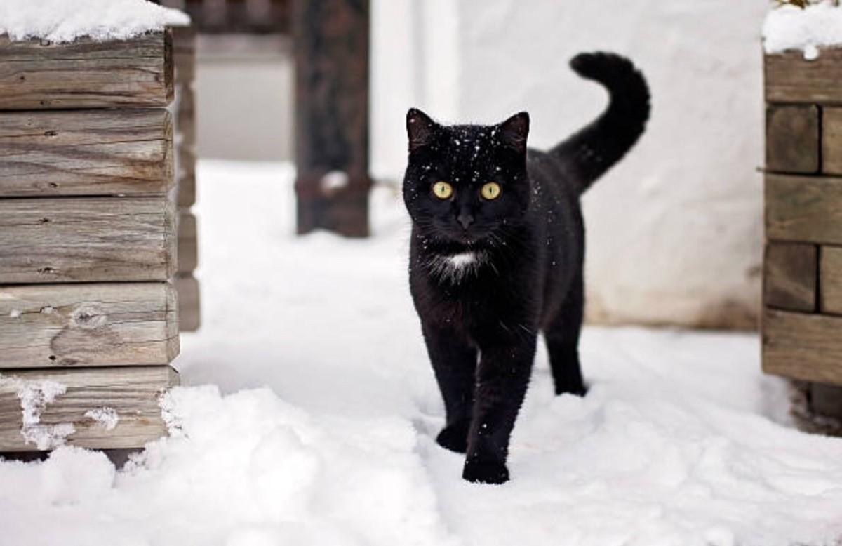 корейская картинка черная кошка в снегу накидка отлично