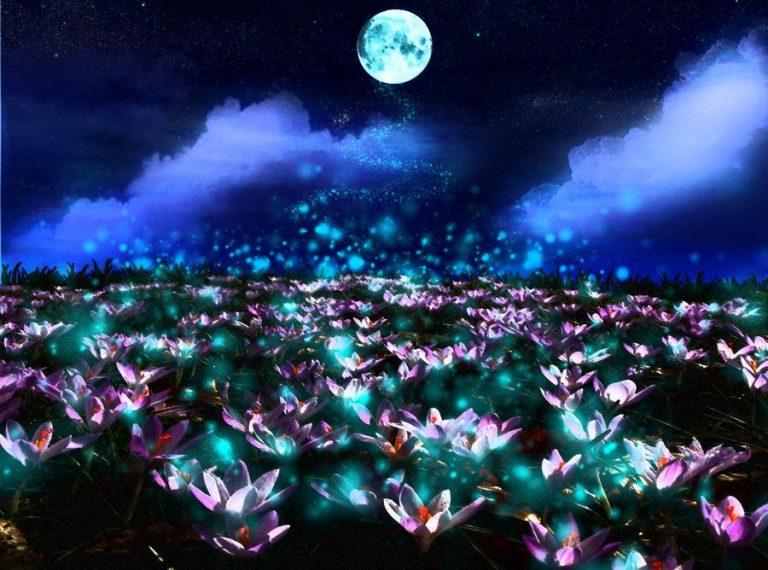 Картинки ночные цветы