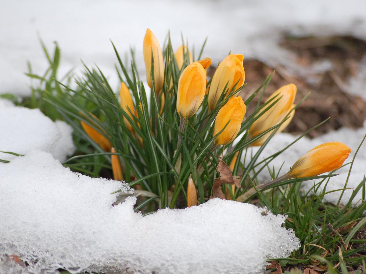 картинки ранней весны на телефон данной статье хочу