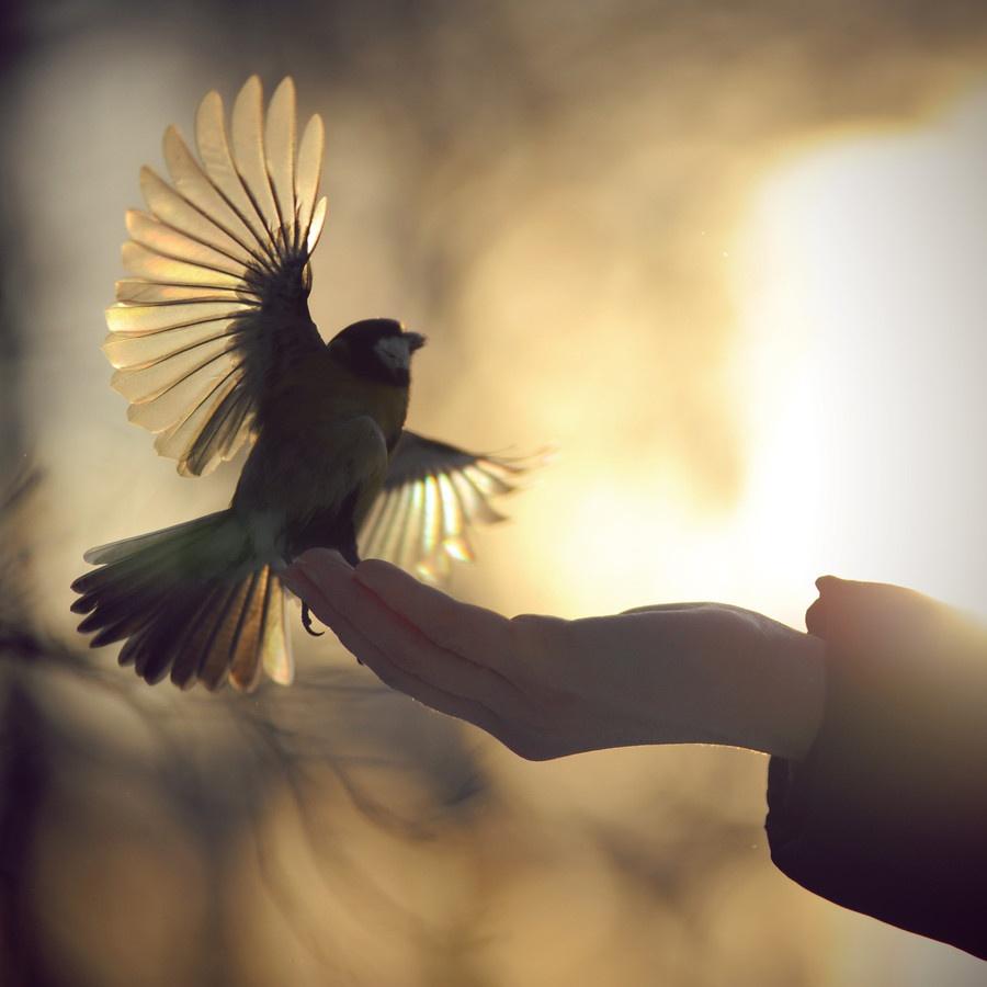 картинки отпусти птицу