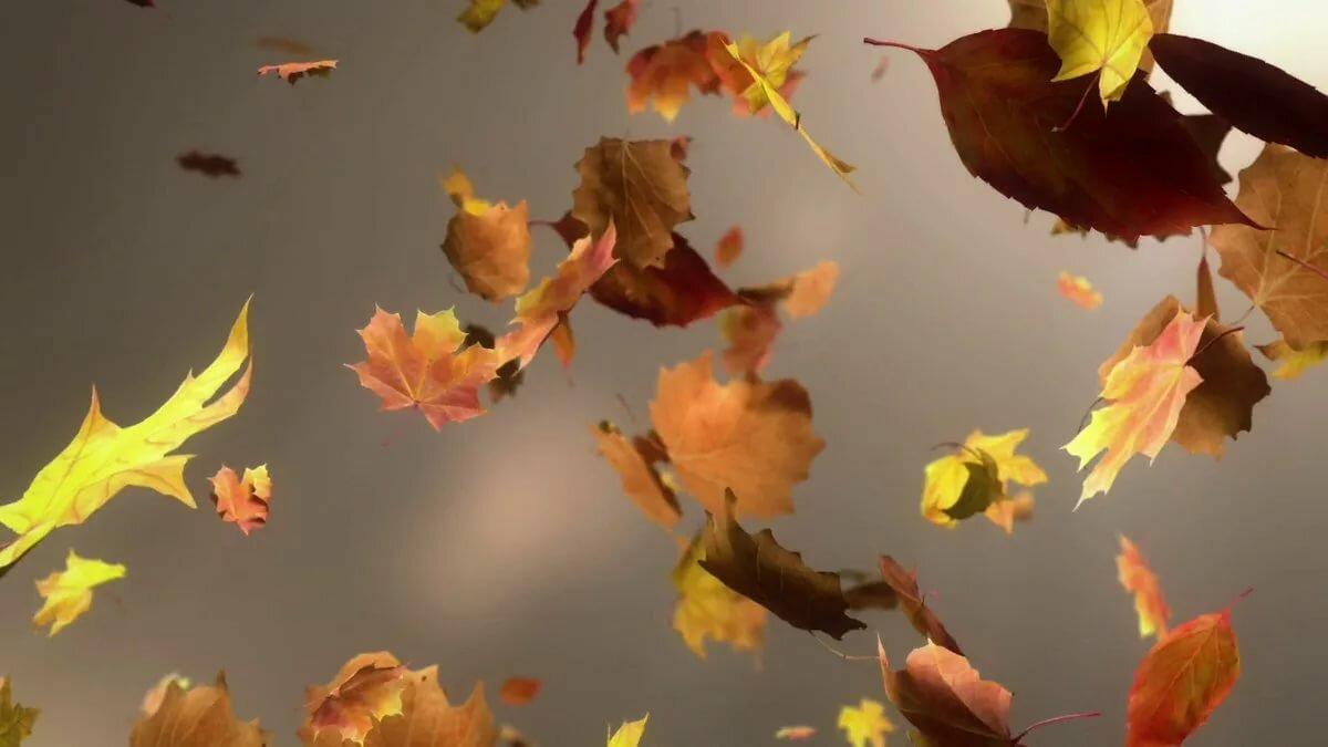 уже картинка улетающие листья корпус отеля