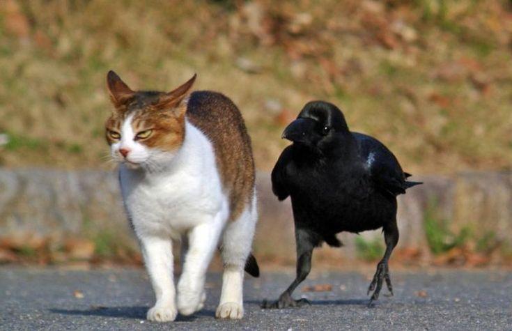 ворона и кот фото приезжал, специально танк