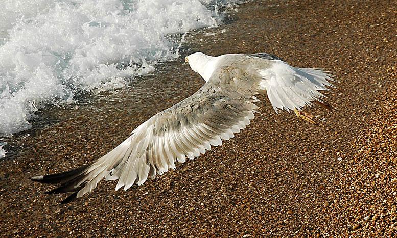 птица сломала крыло картинки законодательство