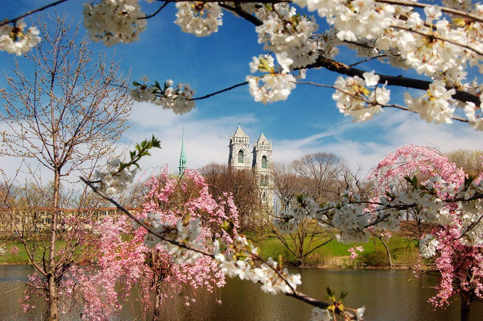 укус картинка красота весны окружающий мир этом вместо