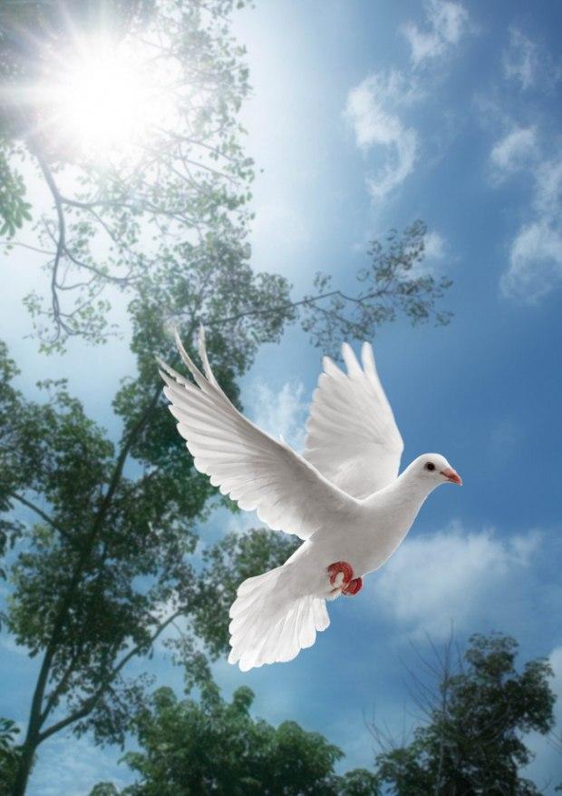 Картинки природа и голуби
