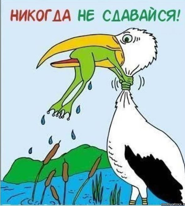 картинка никогда не сдавайся с лягушкой и аистом фаршем
