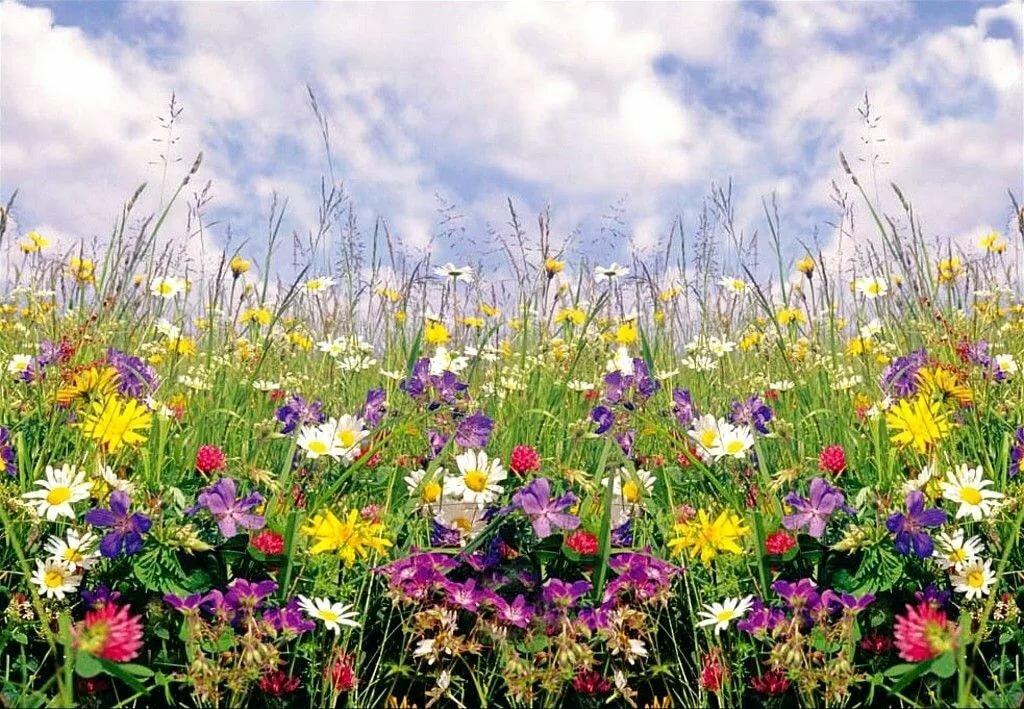фото картинки полевые цветы летом спектор дожидалась
