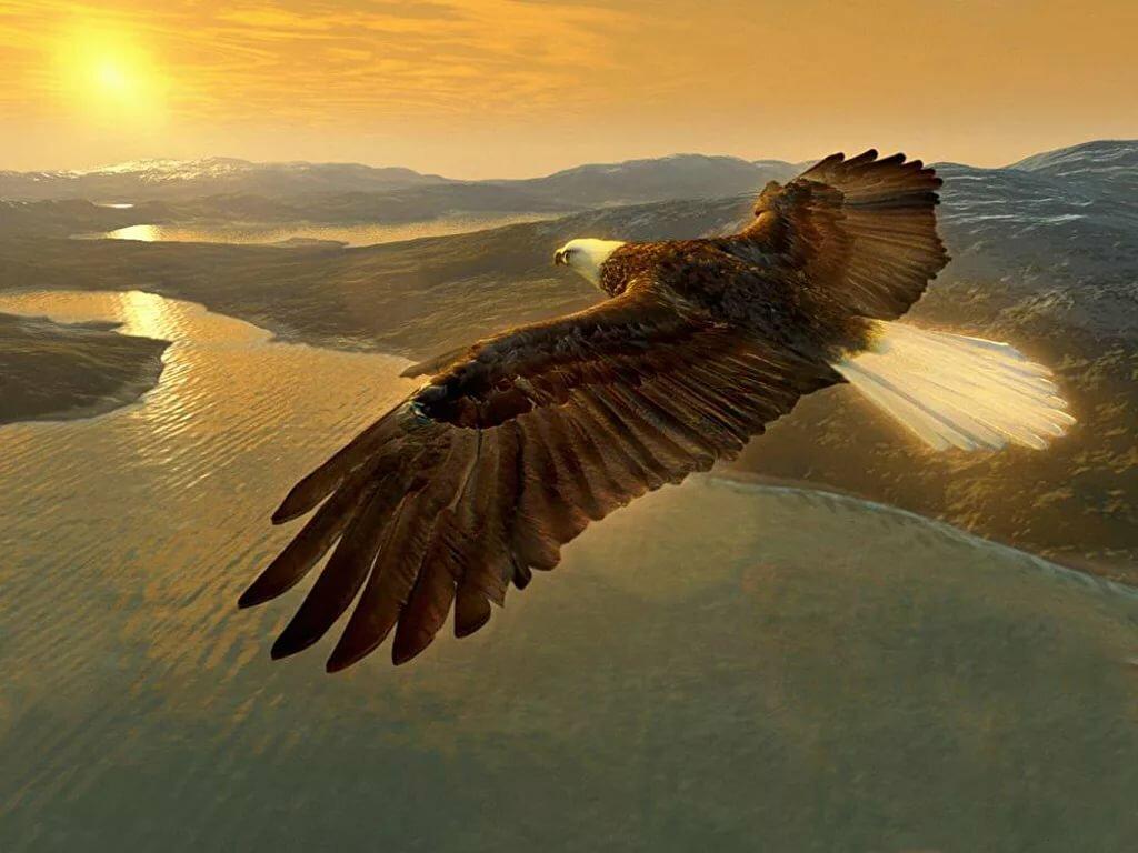 Поздравления летел орел