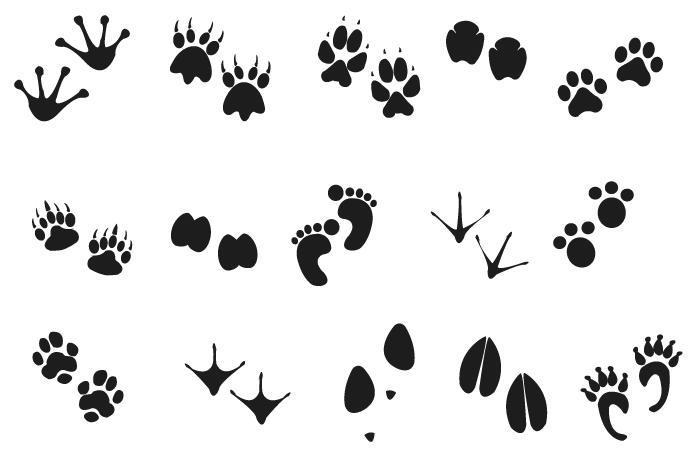 картинки раскраски следы зверей все-таки может выйти