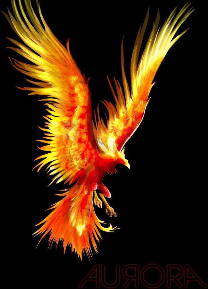 огненные птицы фото дно